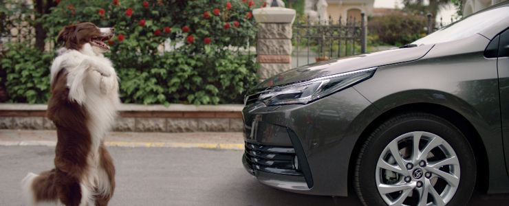 Türklerin çektiği yeni Corolla reklam filmini Avrupa izleyecek